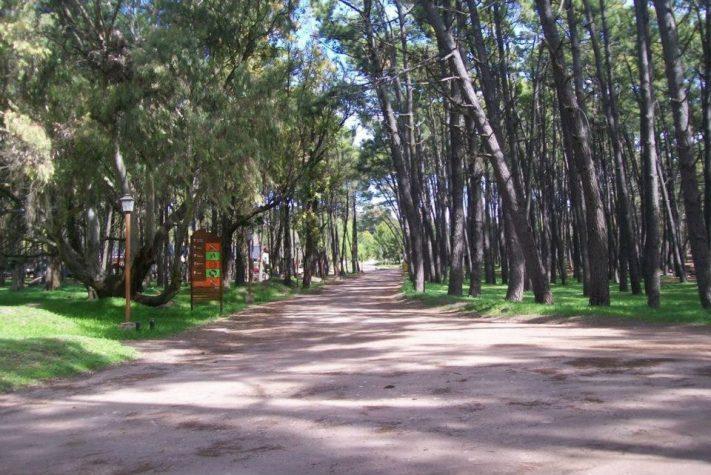 Nota de Cadena 3 de Córdoba: Un bosque artificial, el tesoro escondido en Miramar