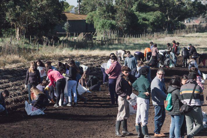 «Papa Solidaria»: 2° Campaña en la Chacra Experimental Miramar