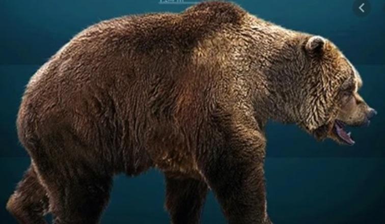 Descubrieron un oso de las cavernas de la Era del Hielo