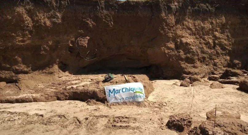 Encuentran en Mar Chiquita un caparazón de Gliptodonte